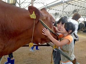 牛と触れ合うきらりパークの子どもたち