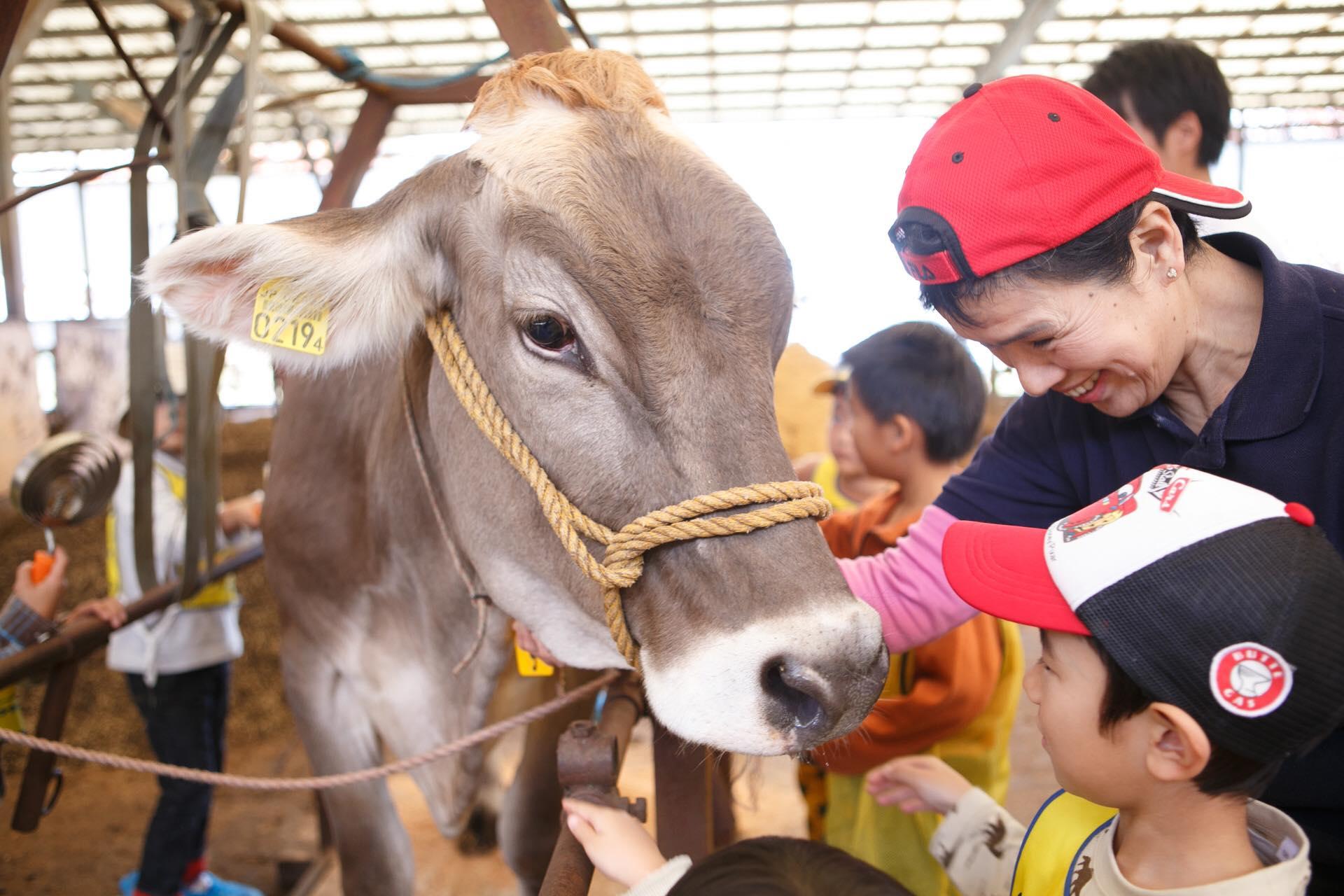 お母さん牛との触れ合い
