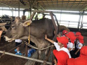 牛とのふれあい